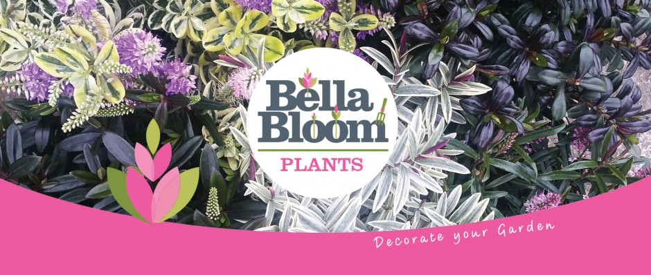 Bella Bloom Hebes